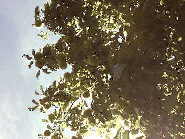 子どもと楽しむ二十四節気:白露・秋分、秋の養生♪